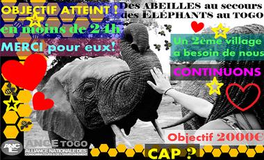 Visueel van project Des ABEILLES au secours des ÉLÉPHANTS au Togo!