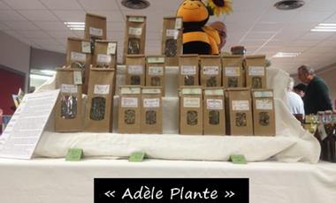 """Visuel du projet """"Adèle Plante"""""""
