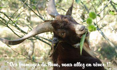 Project visual Des Fromages de Rove, vous allez en Rêver !