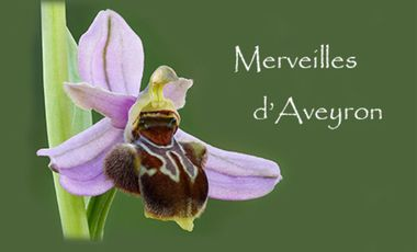 Visuel du projet Merveilles d'Aveyron