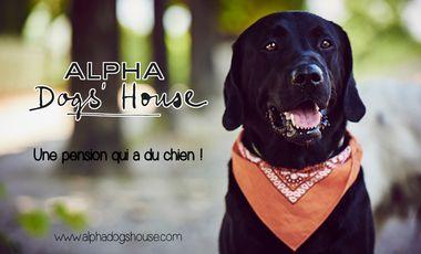Visuel du projet Alpha Dogs'House : une pension qui a du chien !