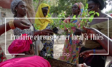 Project visual Produire et consommer local à Thiès