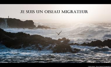Project visual Je suis un Oiseau Migrateur - Le film