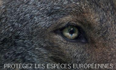 Project visual Espèces Européennes Menacées