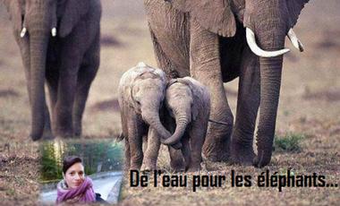 Project visual De l'eau pour les éléphants...