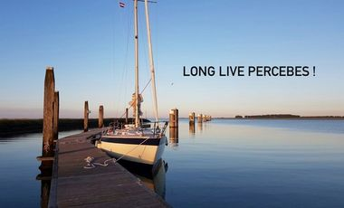 Visueel van project Long live PERCEBES!