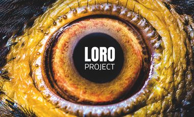 Visueel van project LORO PROJECT