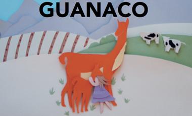 Visueel van project Conservation des population de guanacos au centre du Chili