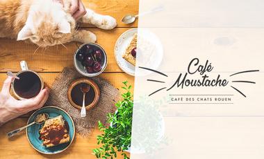 Project visual Café Moustache : café des chats à Rouen