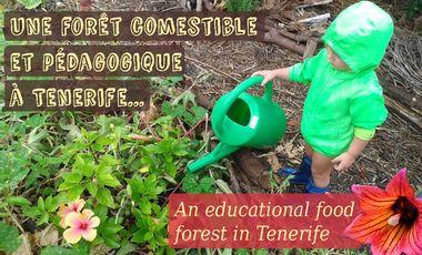 Visuel du projet Une forêt comestible et pédagogique à Tenerife