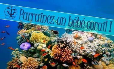 Project visual Parrainez un bébé corail !