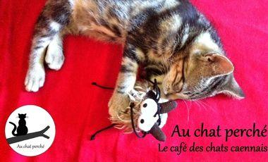 Visuel du projet Au chat perché : café des chats de caen