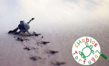 Visueel van project ¿ Hablas Tortuga ? Protection des tortues marines au Panama