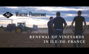 Project visual Le retour de la vigne en Île-de-France - The return of vines in Île-de-France