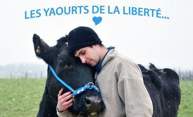 Project visual Les yaourts de la liberté