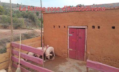 Visueel van project La ferme rose d'Ambodivona