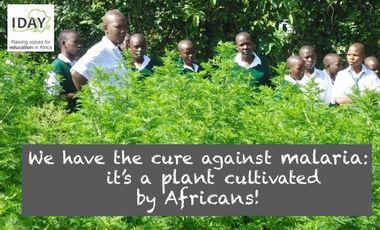Project visual Artemisia for Africa