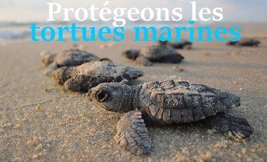 Project visual Projet pour la conservation des tortues marines en Malaisie