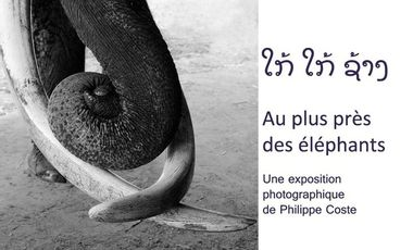 Visueel van project Au plus près des éléphants