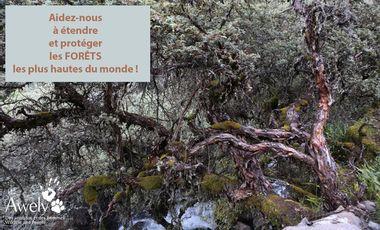 Visueel van project Faire revivre les forêts les plus hautes du monde