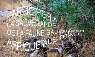 Project visual participer à un projet de sauvegarde de la faune sauvage en Afrique australe