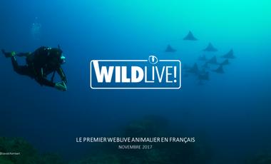 Project visual WILDLive! Participez à l'aventure de la première websérie animalière… diffusée en Live !